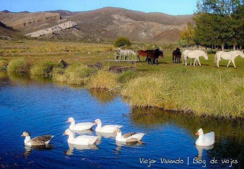 Patos y caballos en los Castillos de Pincheira