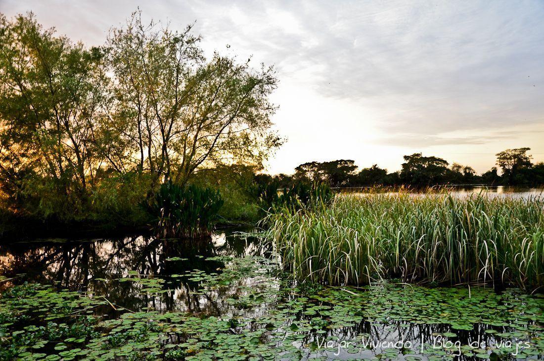 amanecer en los Esteros del Iberá
