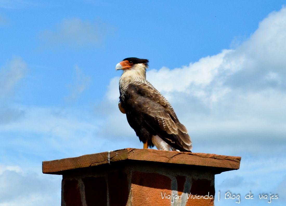 ave en Esteros del Iberá