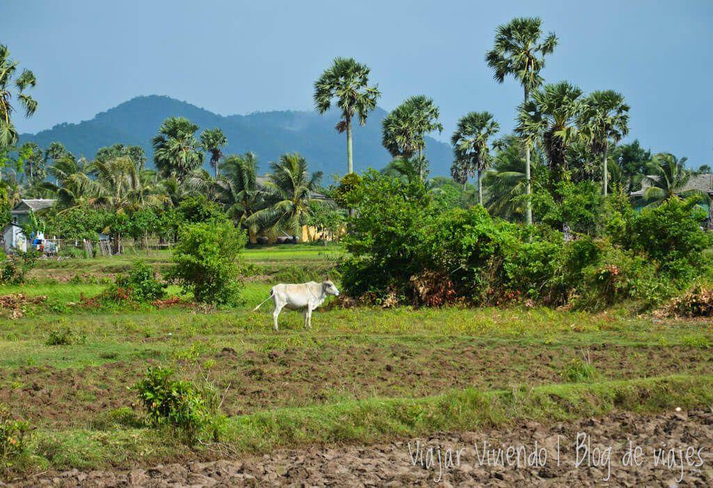 viajar a Kampot, Camboya