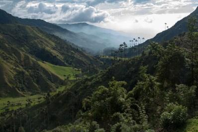 Valle de Cocora, cerca de Quindio