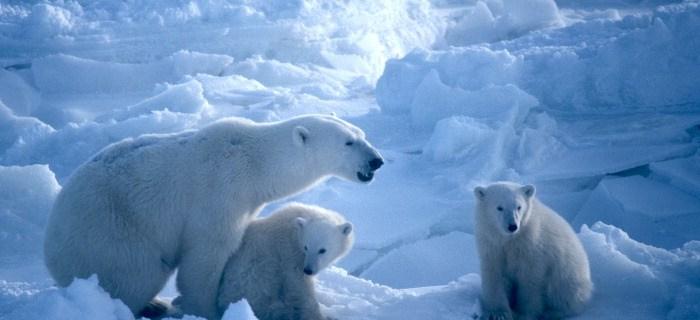 Sistema natural de la reserva de la isla de Wrangel
