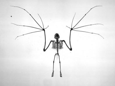 Uno de los murciélagos fósiles del museo de Messel
