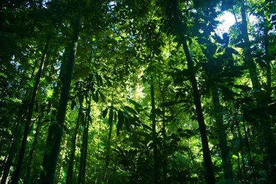 Tupido bosque tropical de Daintree, en Queensland