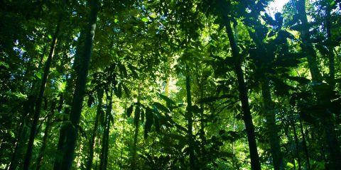 Trópicos húmedos de Queensland