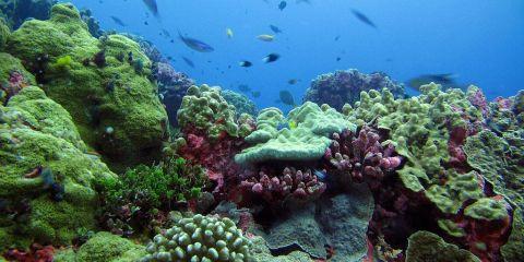 Zona protegida de las Islas Fénix