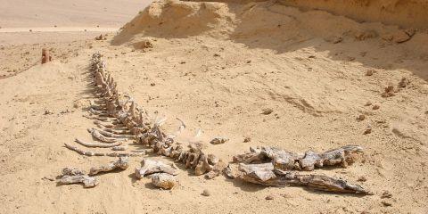 Uadi Al Hitan (El Valle de las Ballenas)