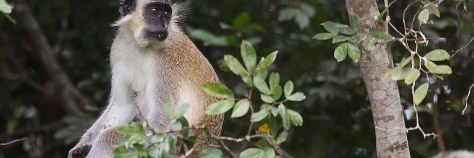 Parque Nacional de Comoé