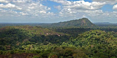 Reserva Natural de Surinam Central