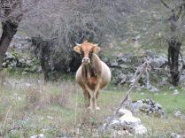 Entre las sierras en Ioannina