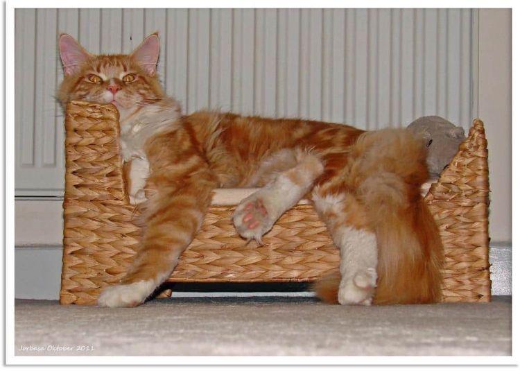 gato-couchsurfing