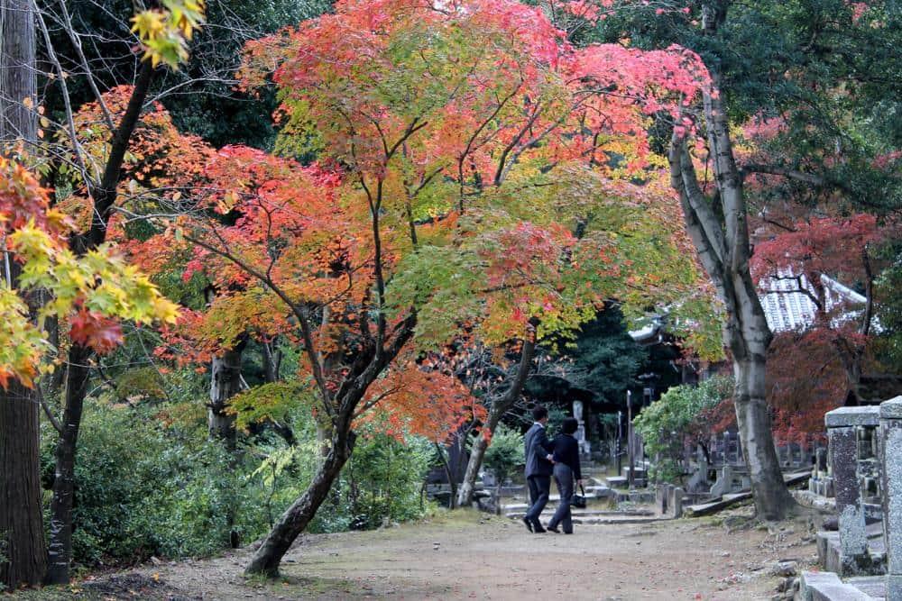 Paisaje otoñal en Japón