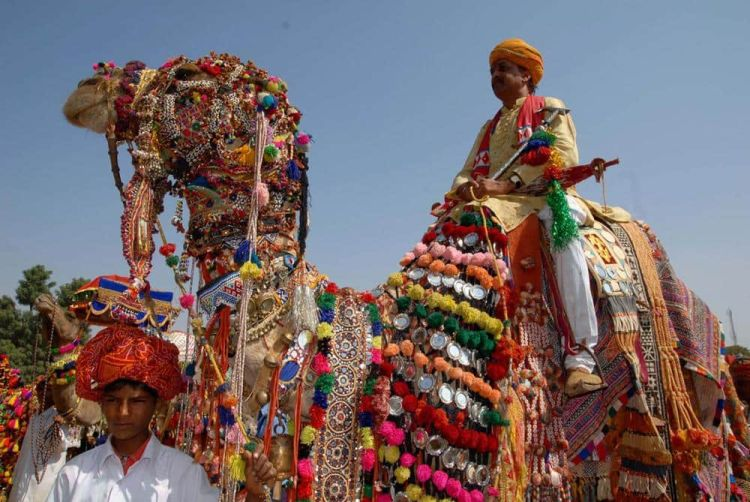 feria-camellos-pushkar-india