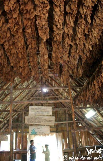 Secadero Tabaco en Viñales, Cuba