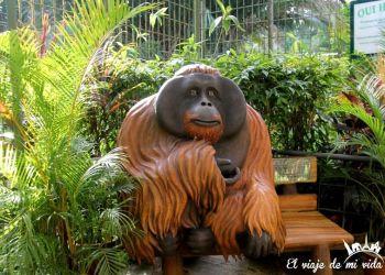 Orangutanes en el Norte de Malasia