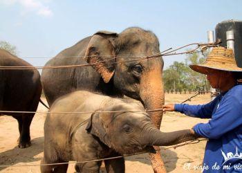 El maltrato animal en Tailandia
