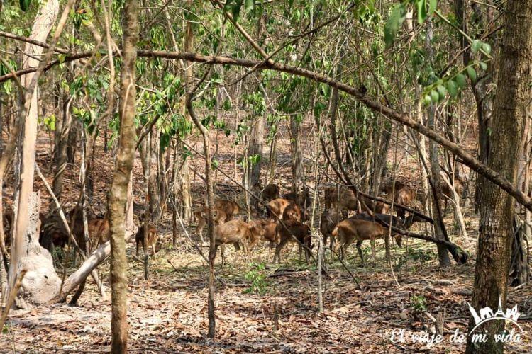 wildlife-friends-foundation-tailandia (5)