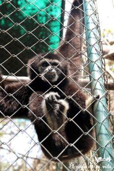 Mono en rehabilitación