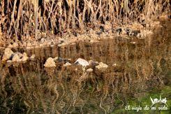 Los manglares de Black Cove Turtle