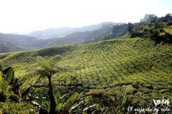 Plantaciones de té en Malasia