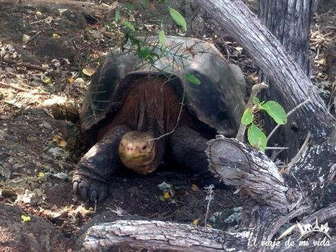 Mi primera tortuga de Galápagos
