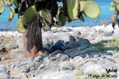 Bebé león marino escansando