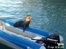 Los leones marinos a sus anchas en Puerto Ayora