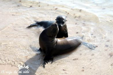 Crías de leones marinos en Galápagos
