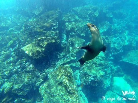 Jugando con leones marinos
