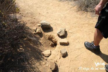 Los nidos de iguana protegidos por los guías con piedras