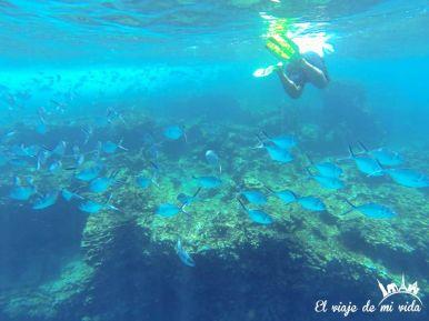 Snorkel en San Cristóbal, Galápagos