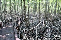 Los manglares de Pramburi