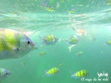 Snorkel en Phuket, Tailandia