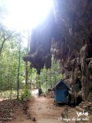 Naturaleza loca de la selva tropical