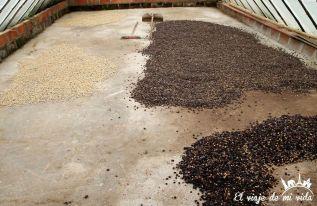 Secado de los granos de café colombiano