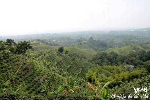 Vistas a los cafetales desde la Finca Mirador, Colombia