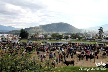 El mercado de ganado de Otávalo, Ecuador