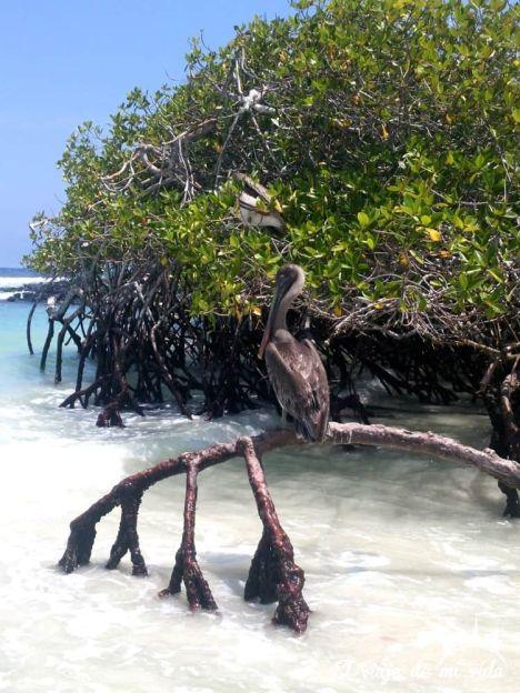 Pajaricos en Playa Brava, Galápagos