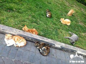 Gatos en la Plaza Kennedy de Lima