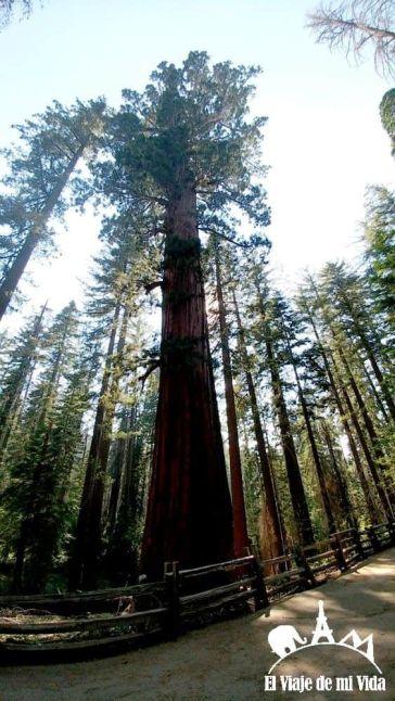 Los bosques de sequoias