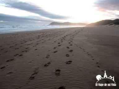 Playa de Segdefield