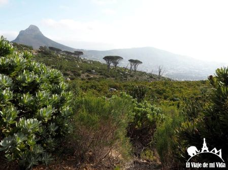 Parque Nacional de Table Moutain