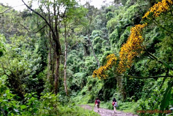 01 Viajfilos en Panama. Sendero Quetzal 01