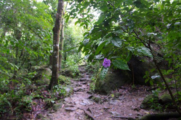 09 Viajefilos en Panama, Valle de Anton 23