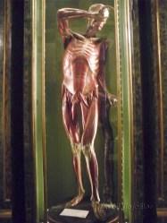 Museo de anatomia copia