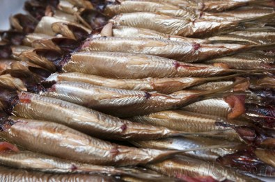 Baltic herrings