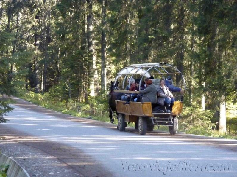 Carros de caballos al Morskie Oko