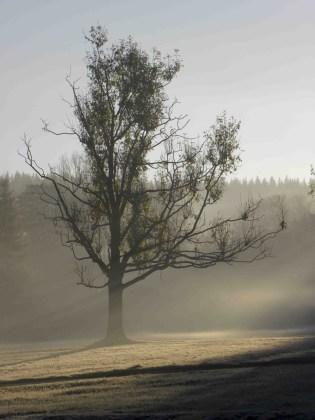 Detalle del parque de Zacopane al amanecer