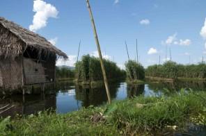 Lago Inle, floating gardens 02