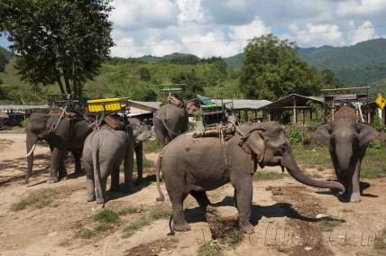 05 Trekking Chiang Rai 12